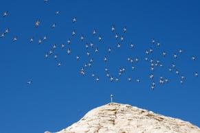神殿の上を野鳥の群れが飛んでいきました。(コウノトリかな??)ナイル川は野鳥の宝庫とのこと
