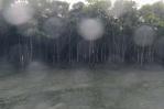 マングローブクルーズ、増水、満潮、大雨、南の島の自然はけっこう過酷。