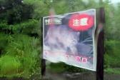 西表島、大雨、山猫の看板もウニョウニョ