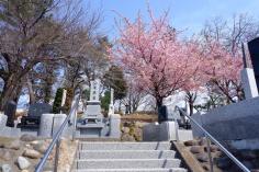 古墳の上の墓